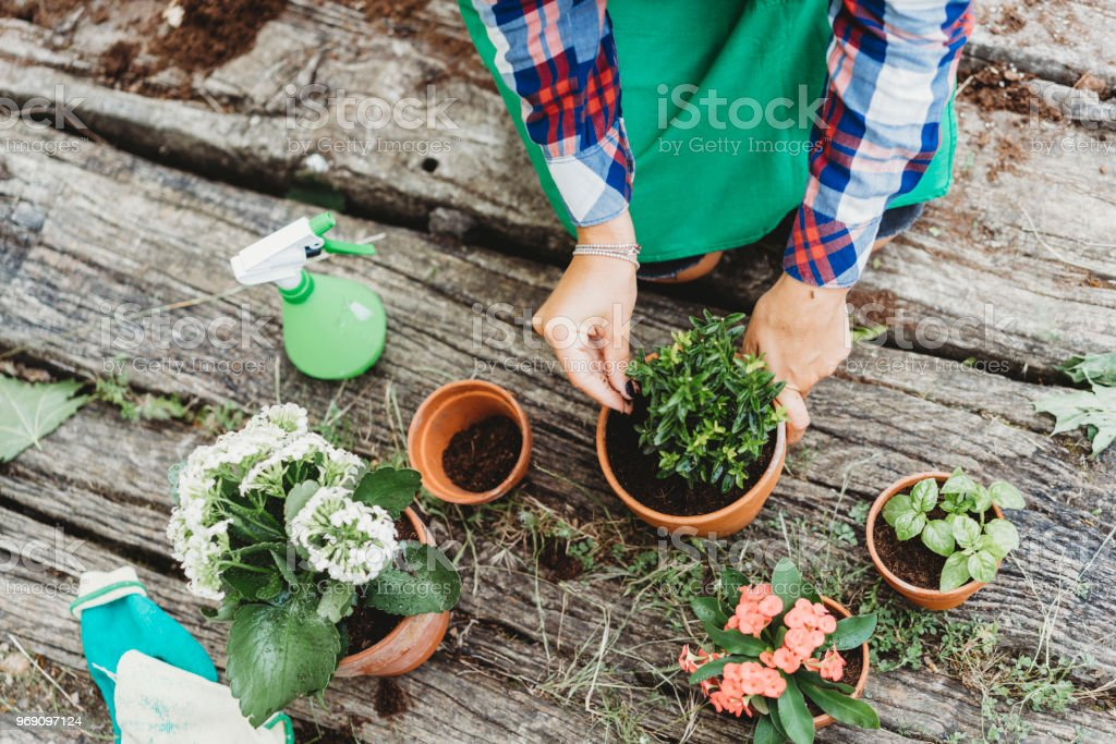 Young adult woman taking care of plants stock photo