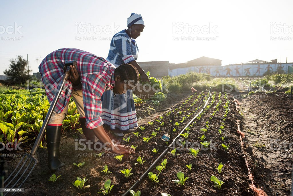 Young African Male and Adult African Woman working in garden stock photo