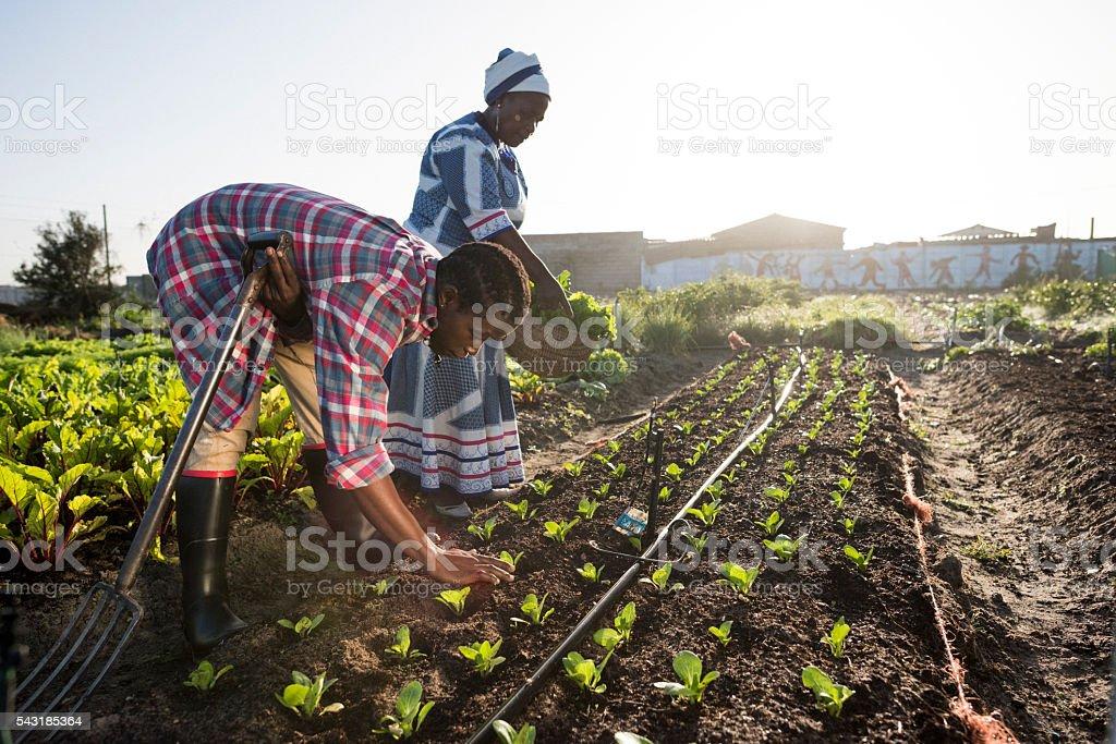 Młody Afryki Student i dorosłych afrykańskich kobiet pracujących w ogrodzie – zdjęcie