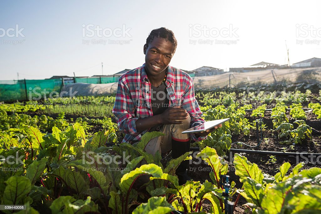 Young African male with tablet in vegetable garden stock photo