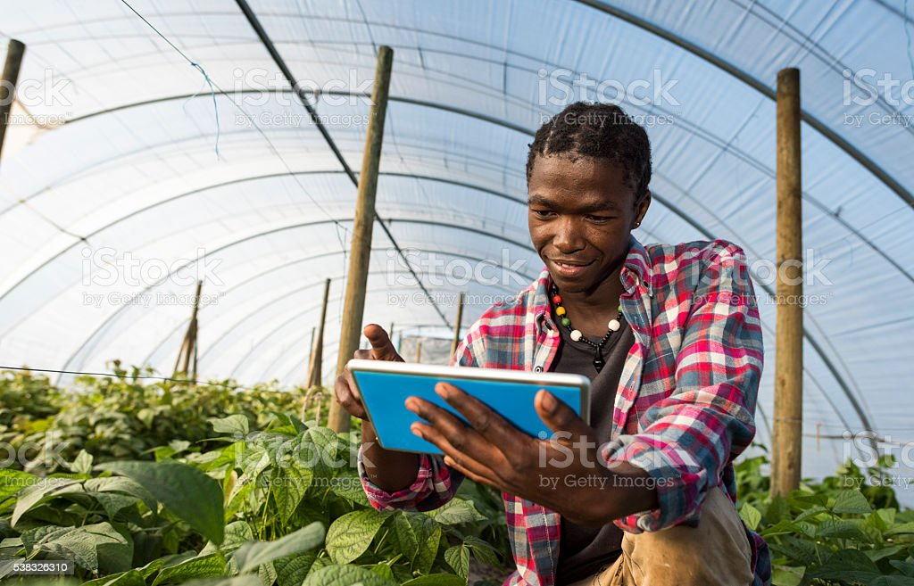 Young African man checking tablet information in greenhouse圖像檔