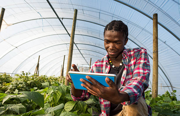 Young African man checking tablet information in greenhouse stock photo
