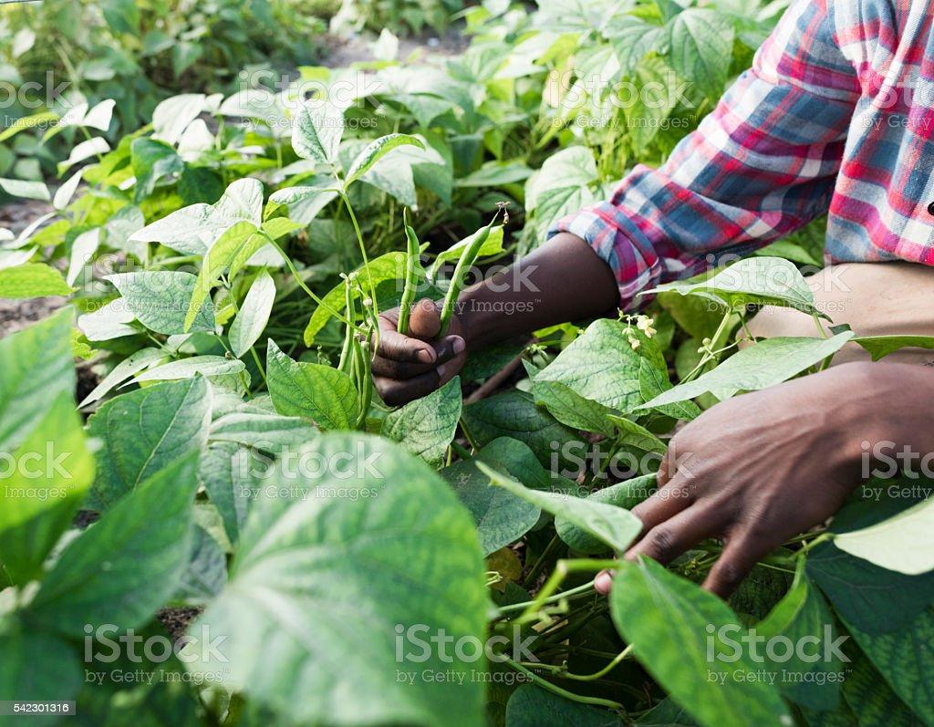 Pie sonriente hombre joven africano al jardín - foto de stock