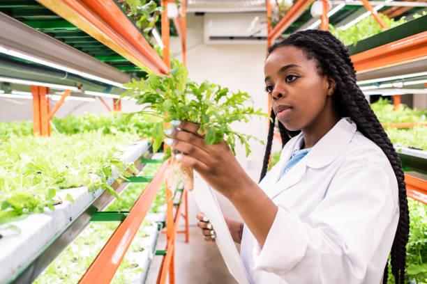 Junge afrikanische Frau im weißen Mantel hält einen der grünen Sämlinge während der Arbeit – Foto