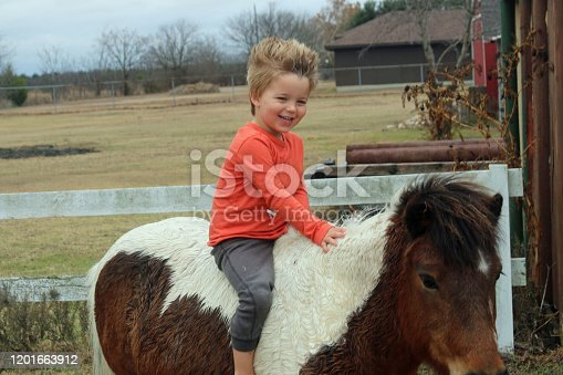 Young, age 3, caucasian male, sitting on pony, bareback and barefoot