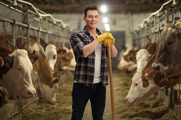 Young agricultural worker posing in a cowshed Young agricultural worker posing in a cowshed dairy farm stock pictures, royalty-free photos & images