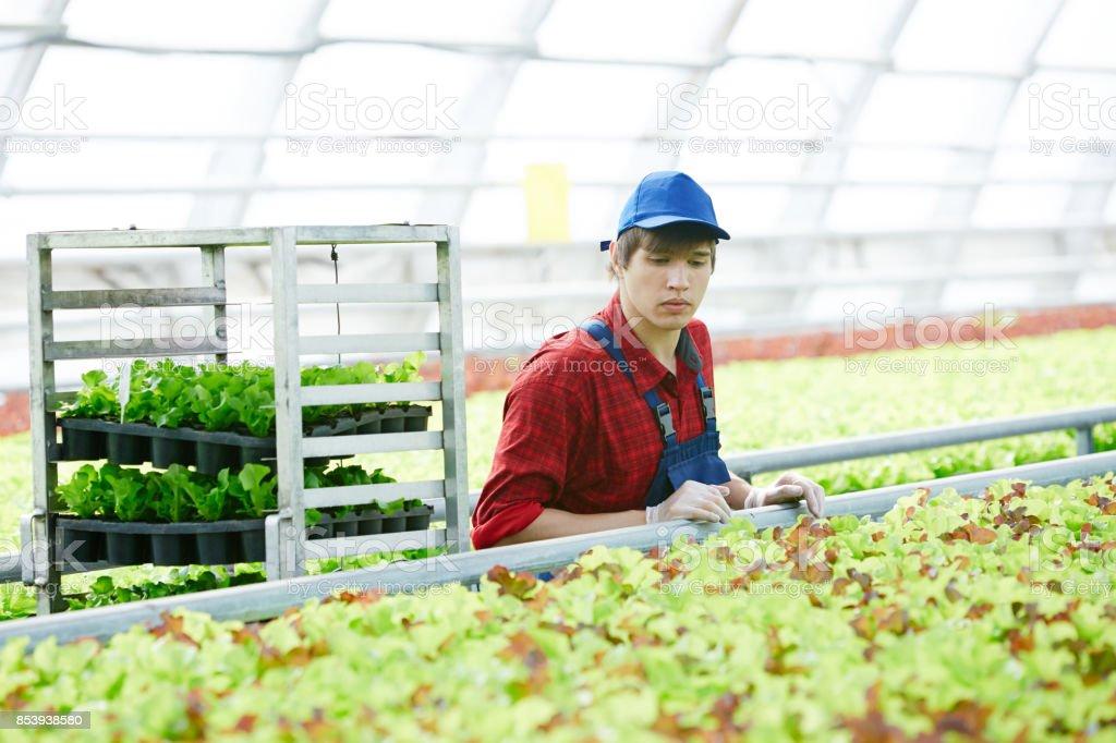 Agro-engenheiro jovem - foto de acervo
