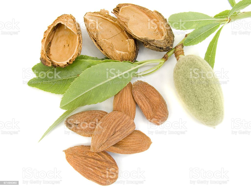 Young almond royalty-free stock photo
