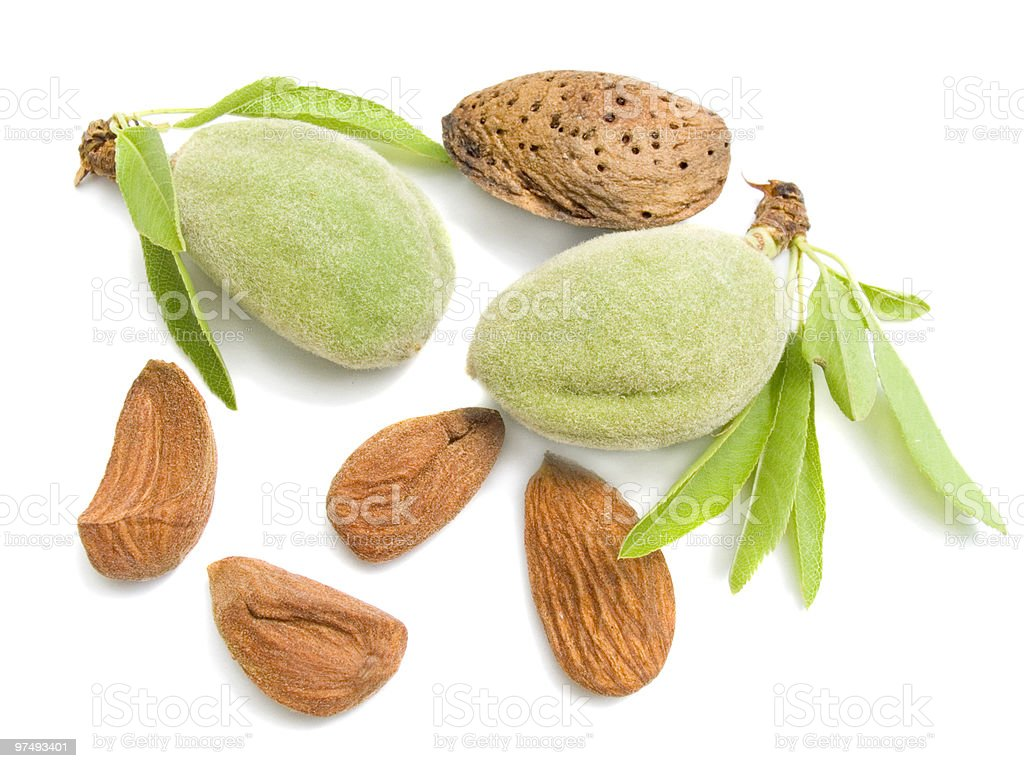 young almonds royalty-free stock photo