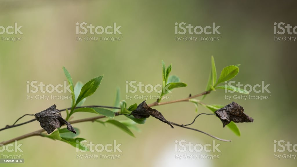 Young And Old Twig In Artistic Closeup Metaphor It Symbolizes The