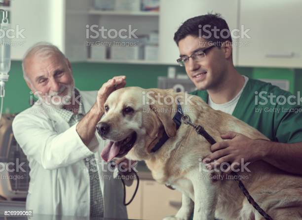 Young and senior veterinarian working together picture id826999052?b=1&k=6&m=826999052&s=612x612&h=edkzw bmho8dx46legncpf5h1ajxy5o7oivbhfhrwto=