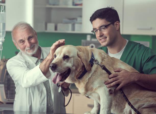 Young und Senior Tierarzt zusammenarbeiten – Foto