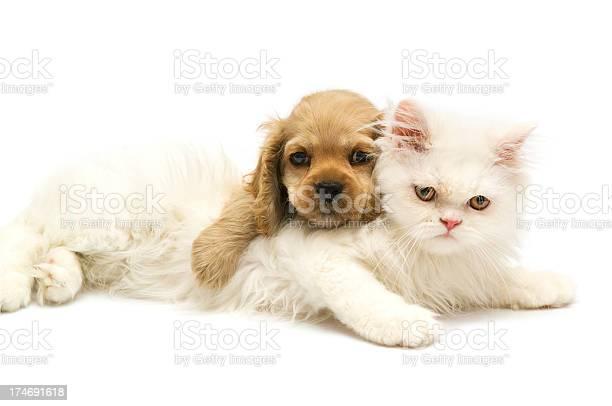 Young animals picture id174691618?b=1&k=6&m=174691618&s=612x612&h=om97ga3hhx9kg5vuykpzaarkp7yd 8qec 8endyy ts=