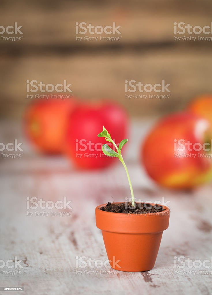 Young apple sprout on a wood royalty-free stock photo