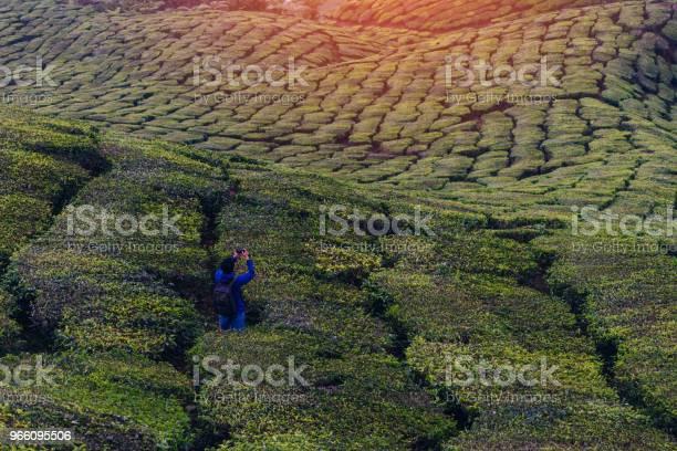Unga Asiatiska Backpacker Resa In Te Fält Med Dimma Ung Man Resenären Ta Ett Foto Av Berg Te Sätter Med Dimmigt Njuter Teplantager I Cameron Highlands Nära Kuala Lumpur Malaysia-foton och fler bilder på Asien