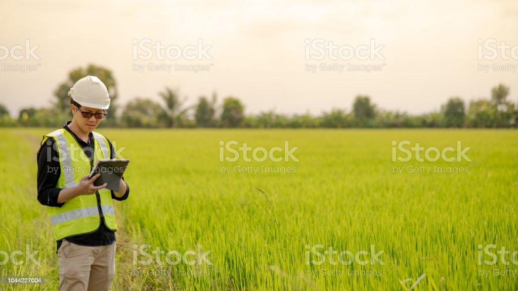 Jovem asiático masculino agrônomo ou engenheiro agrícola, observando o campo de arroz verde com tablet digital para a pesquisa de Agronomia. Conceitos de agricultura e tecnologia - foto de acervo