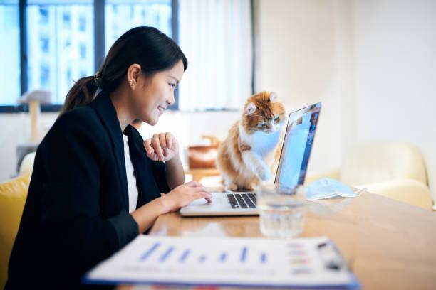 joven asiática trabajando en un ordenador portátil mientras que el gato viene a verse con inquisitivamente - working from home fotografías e imágenes de stock
