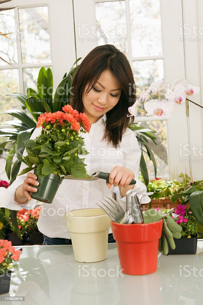Young Asian Woman Working with Potted Plants royalty-free stock photo