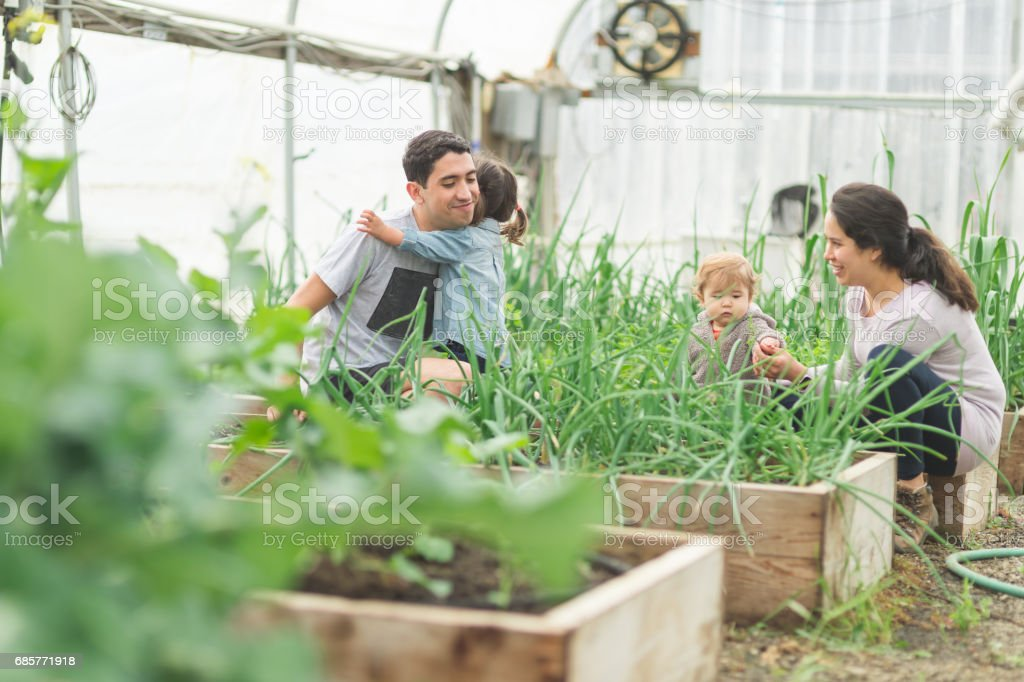 Young attractive ethnic parent inspect their greenhouse with their two young children royalty-free stock photo