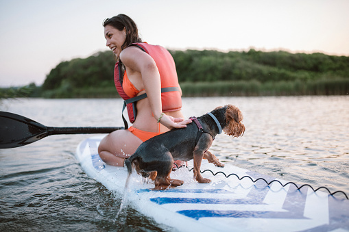 Young Attractive Woman is Paddleboarding At The Ocean With Her Dog , Good Emotions