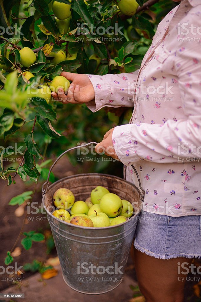 Young Attractive Woman on a Farm. stock photo