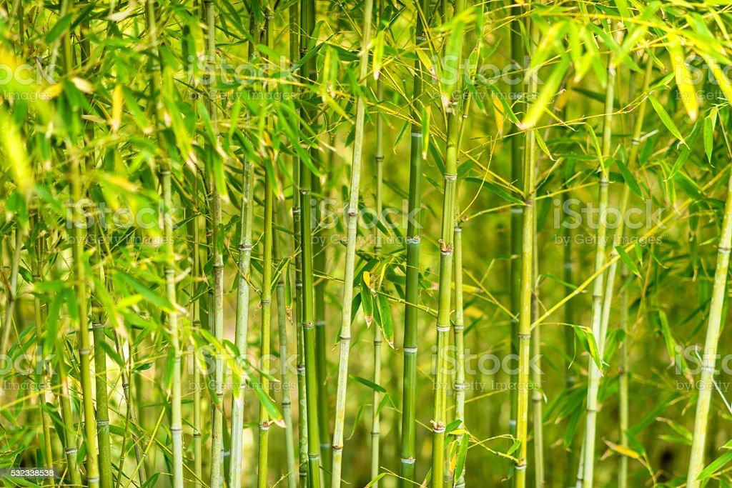 Jovem Com Folhas Plantas Bambu - Imagens de acervo e mais fotos de ...