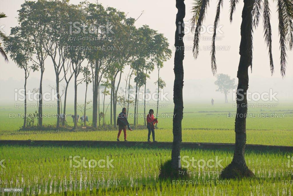 Young Bangladeshi women walk by the rice field in Dhaka, Bangladesh. stock photo