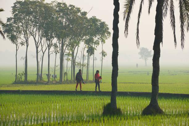 Young Bangladeshi women walk by the rice field in Dhaka, Bangladesh. 스톡 사진