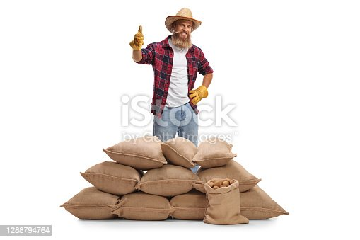 Young bearded farmer posing behind burlap sacks with potatoes and gesturing a thumb up sign isolated on white background