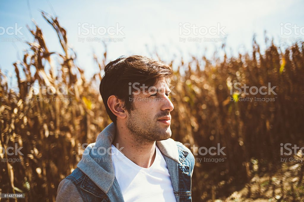 Young bearded man standing in the middle of cornfield stock photo