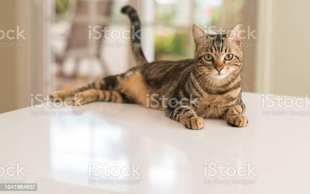 Young beautiful cat at home picture id1041984932?b=1&k=6&m=1041984932&s=612x612&h=xz9a35kta57kddnxobdjduswl0elo3rxo9nbyt bvj0=