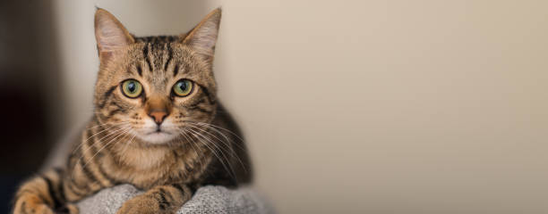 Young beautiful cat at home picture id1041987044?b=1&k=6&m=1041987044&s=612x612&w=0&h=xuiklqx2qokgtr3ds8u6dykvcxkbm5iwaiivkmk0idc=