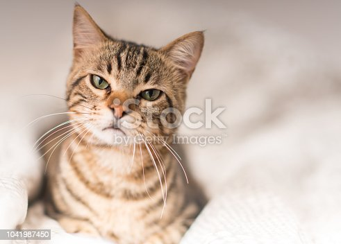 istock Young beautiful cat at home 1041987450