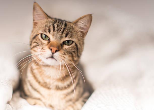 ung vacker katt hemma - kattdjur bildbanksfoton och bilder