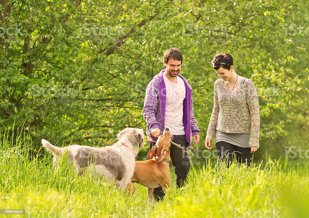 young beautiful couple walking and playing dogs stock photo