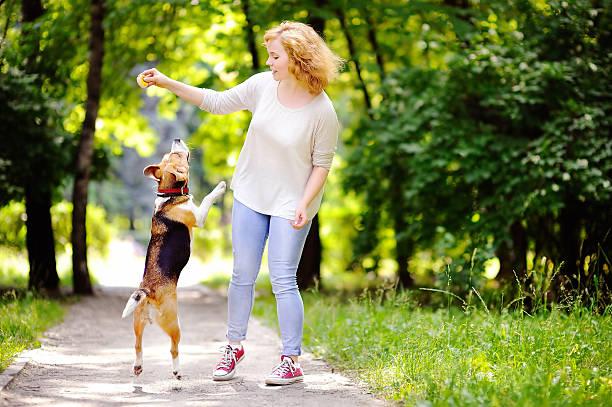 Young beautiful woman playing with beagle dog picture id547019542?b=1&k=6&m=547019542&s=612x612&w=0&h=tshaygkkodrsf xzrfiu60xni0snl1jzmpm0bmkckpc=