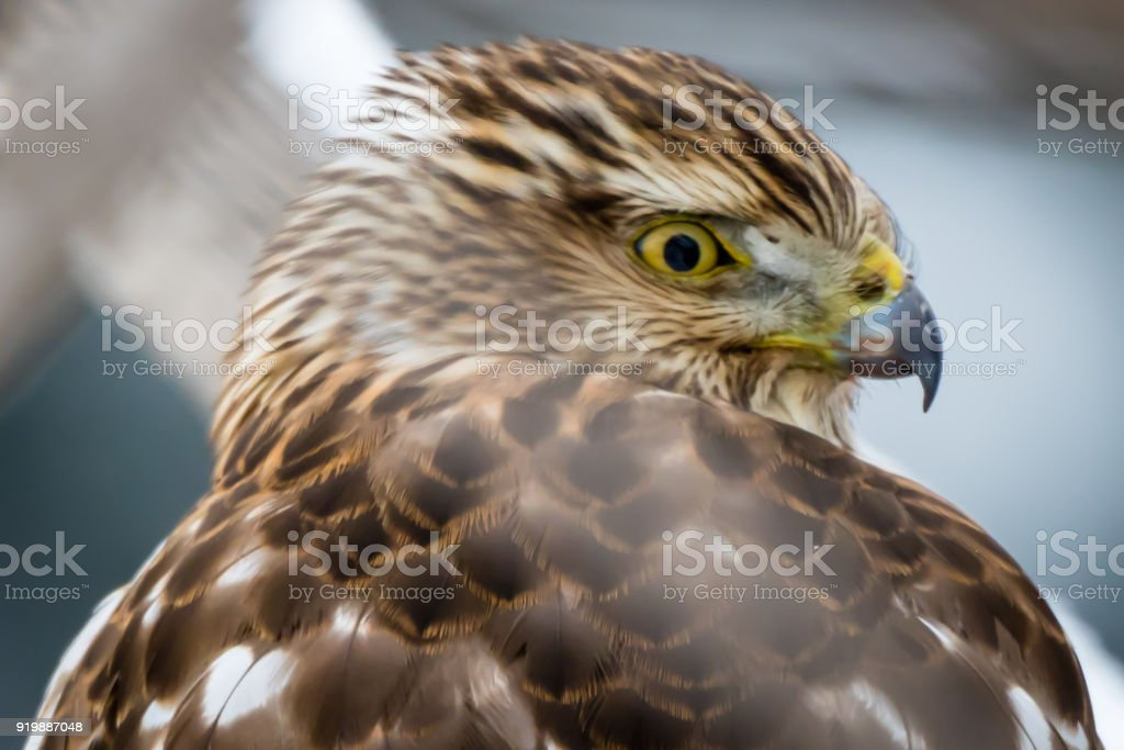 Young Bird stock photo