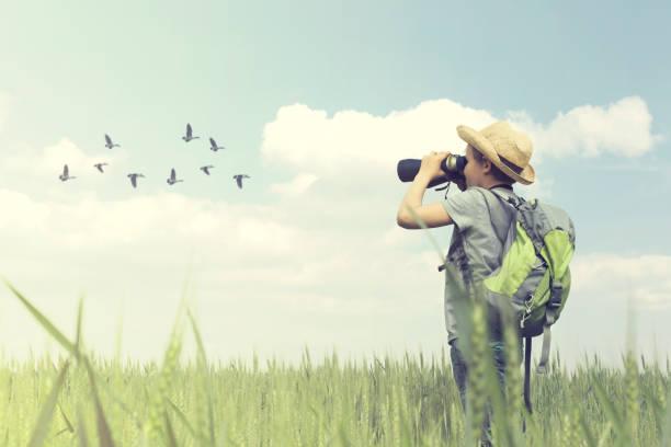 Young birdwatcher looks with his binoculars the bird world stock photo