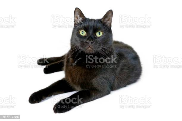 Young black cat lying on a white background picture id867717630?b=1&k=6&m=867717630&s=612x612&h=1lvz0sqv5hhpbqn5ee5alexoj cb03th5ewynacmica=