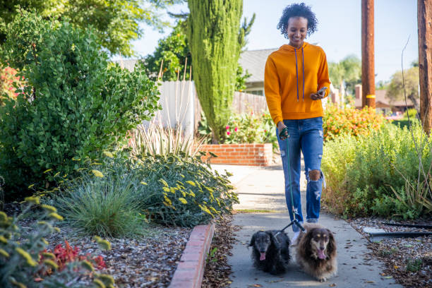 Young black woman walking dogs with smartphone picture id1160229044?b=1&k=6&m=1160229044&s=612x612&w=0&h=d4pxeyzcxf5c9miujwzvg4pmgmrfe5 rldpmnthh ao=