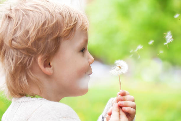 Young blond kid blowing wishes on dandelion seed stock photo