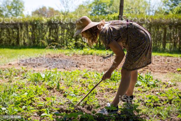 Young Woman Girl Farmer With Shovel And Pitchfork Harvesting Garlic Bulb In Farm Or Garden Digging Out Of Soil Ground Stock Photo Download Image Now Istock