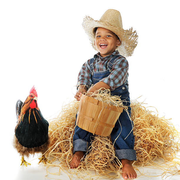 Young boy as a farmer with a rooster during a photo shoot An adorable biracial farm boy holding a basketful of eggs while sitting on a hay stack, a rooster standing nearby.  On a white background. bib overalls boy stock pictures, royalty-free photos & images