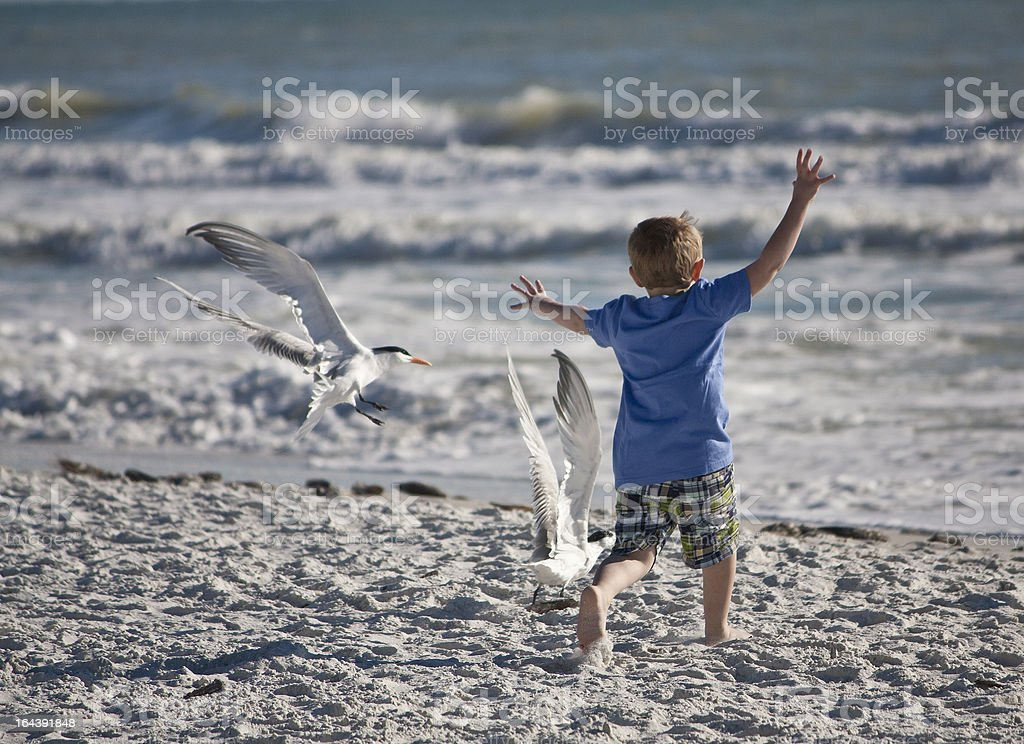 Young Boy Chasing Sea Gulls stock photo
