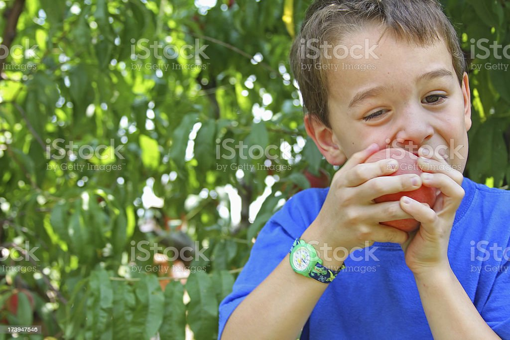 Young boy eats self picked peach at the orchard royalty-free stock photo