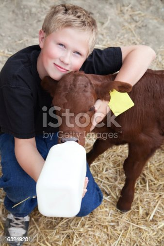 istock Young boy giving milk from a bottle to a calf 168249281