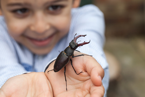 istock Young boy holding a stag beetle 670838952