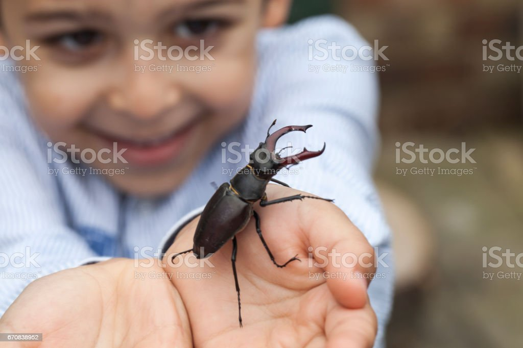 Young boy holding a stag beetle – Foto