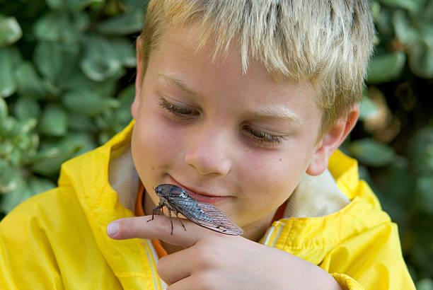 Young Boy Holding & Examining A Cicada Bug stock photo