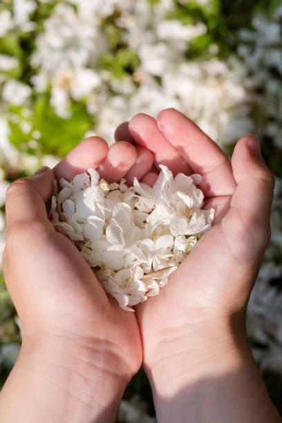 kleiner junge mit weißen blütenblättern in herzform - liebesbeweis für ihn stock-fotos und bilder
